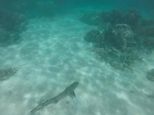 Gentle sharks!