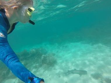 The shark and I