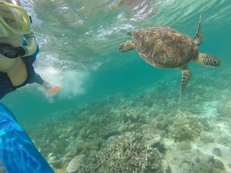 Swim turtle swim!