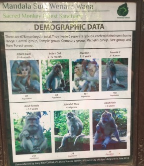 The demographic data from Ubud's entire monkey sanctuary.