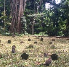 Monkey cemetery ;(