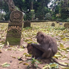 Mother monkey grooming child in front of a monkey tombstone