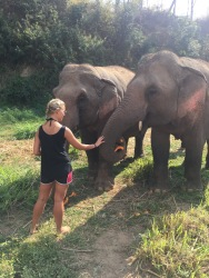 Feeding the very pregnant elephants their pumpkins for the day!