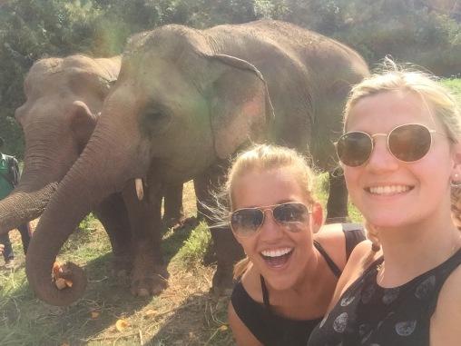 Ellphie (Selfie with an elephant, get it?)