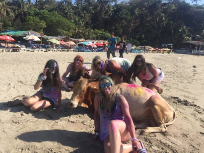 Of course cows participate in Holi too on the beaches!