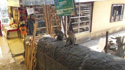Goodbye monkeys!!