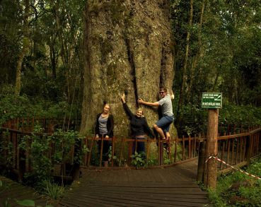 Brittany, Fran and JP hugging the largest tree in South Africa