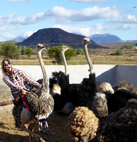 Riding Ostriches!