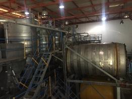 Simonsig winery tour