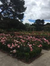 The Rose Garden in El Parque del Buen Retiro