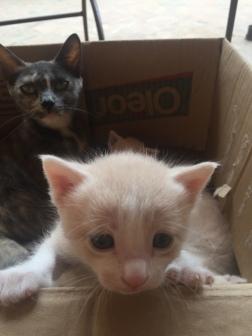 Momma bear and baby kitty!!